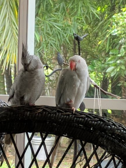 How Much Time Should Your Parrot Spend Out of Cage?