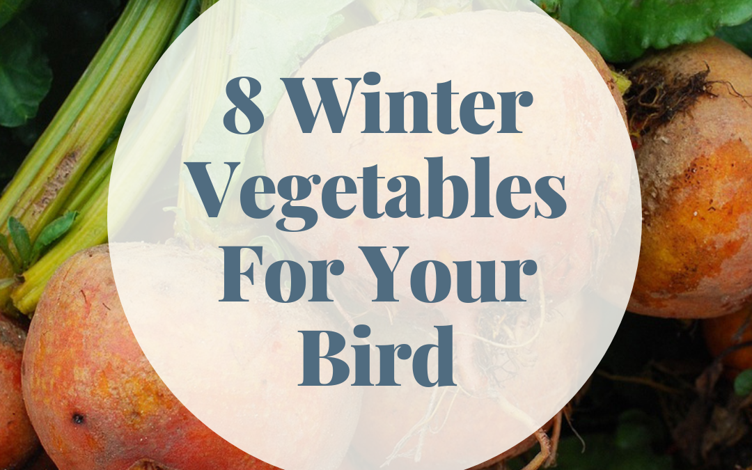 Wonder About What To Feed Your Bird In Winter?