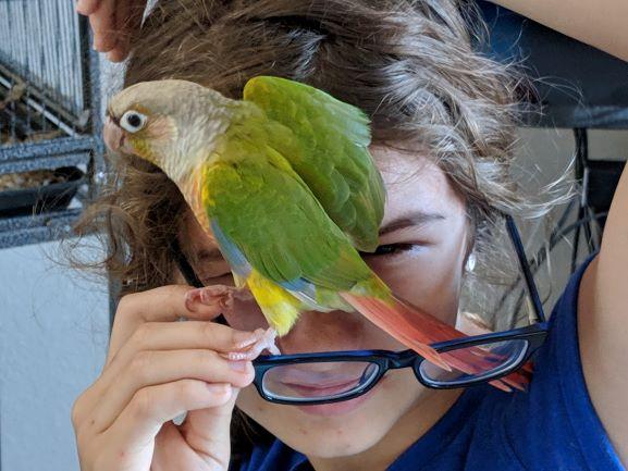 Parrot Preferences: Rescue or Raise