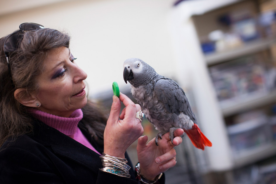 Harvard study shows parrots can pass classic test of intelligence