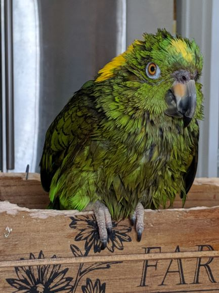Can Taking Seeds Out Of Your Parrot's Diet Make Them Happier?