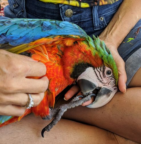 Do Parrots Like To Bathe?
