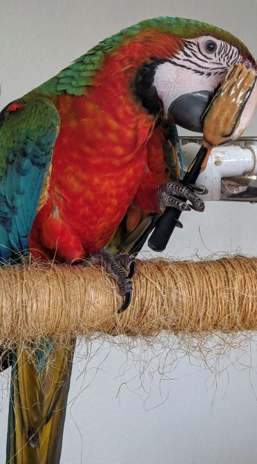How Do You Keep Your Parrot Cool During The Summer?