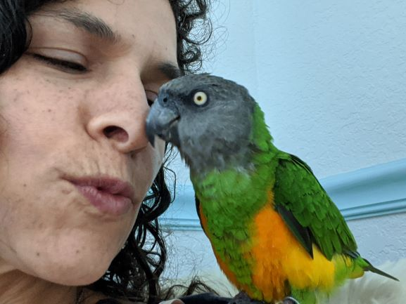 What Are Senegal Parrots Like As Pets?