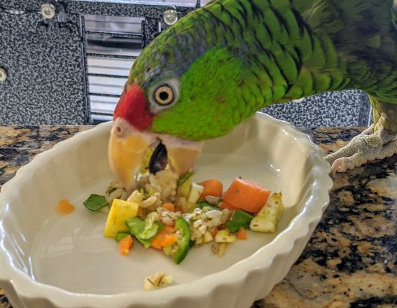 What Vegetables Am I Feeding My Parrots Today?